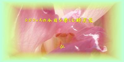 Paiko6807sijifosunokyou1d2