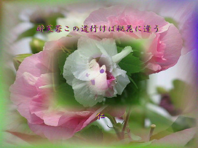 Photvr1201suifuyokonomiti1per